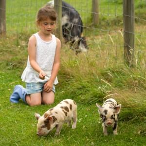 Piglets at Fairfields Farm