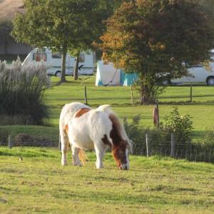Campsite grazing